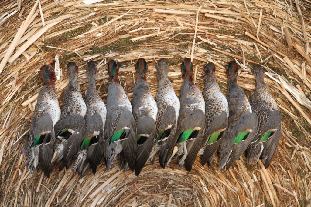 Hunting Gear Duck Hunting Duck Hunting Calls And Duck